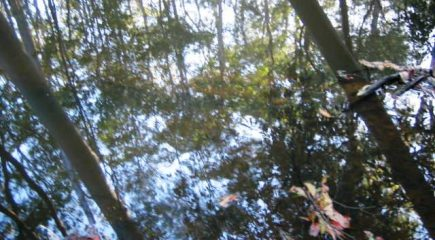 creek mirror 4